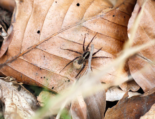 Common Fall Pests in the Pacific Northwest
