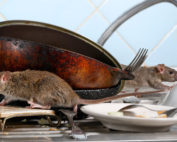 Commercial Kitchen Pest Prevention
