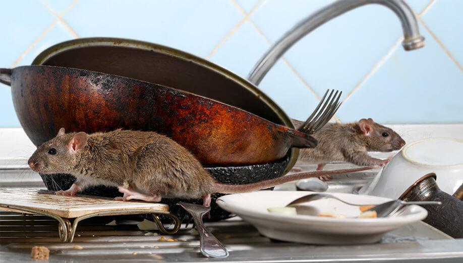 Commercial Kitchen Pest Prevention
