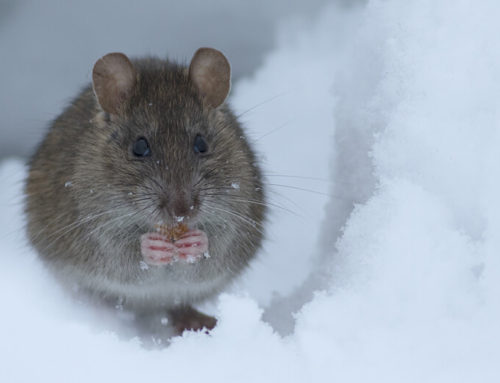 Do You Need Pest Control in Winter?