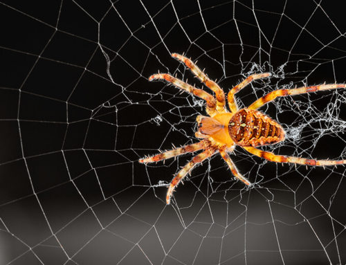 Getting Rid of Spiders: DIY or Hire a Professional?