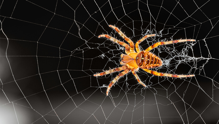 get rid of spiders in home